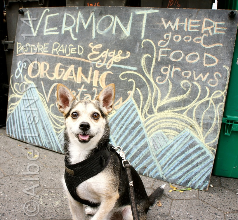 Albert the Dog at Union Square Greenmarket, NY