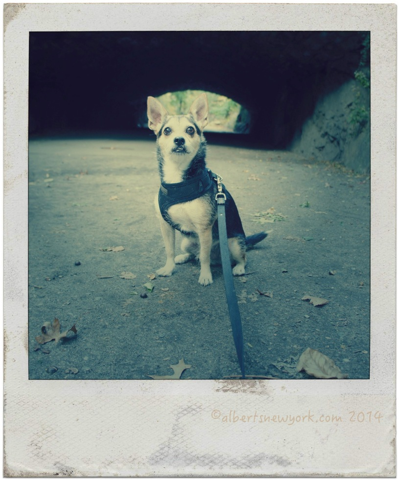 Albert the Dog Polaroid