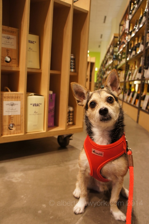dog at wine store