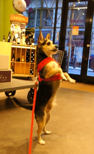How about if I stand on my hind legs? Now can I have all the biscuits?