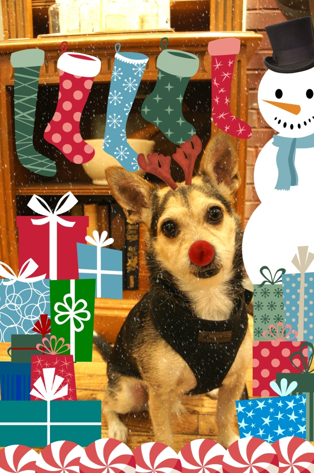 Albert the Dog with Gifts