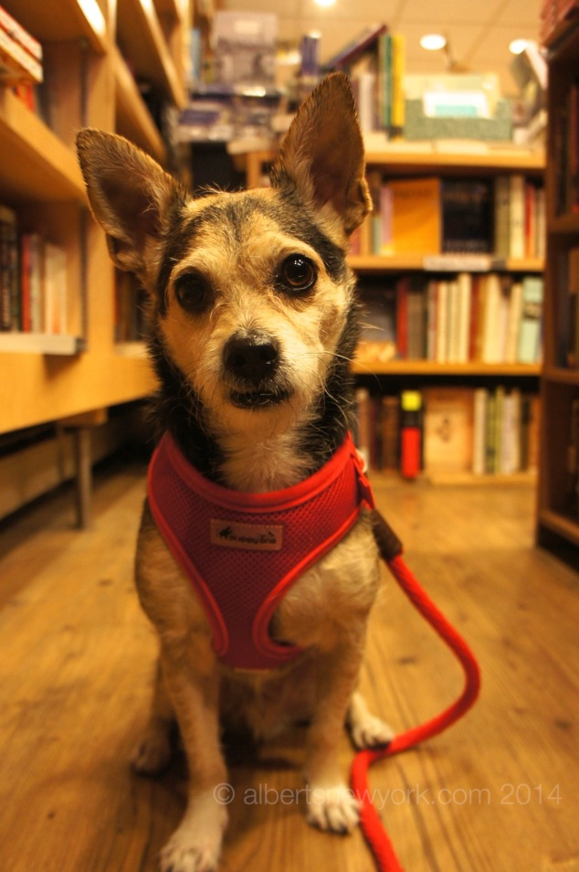 Albert the Dog at the bookstore