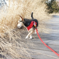These grasses smell so interesting.