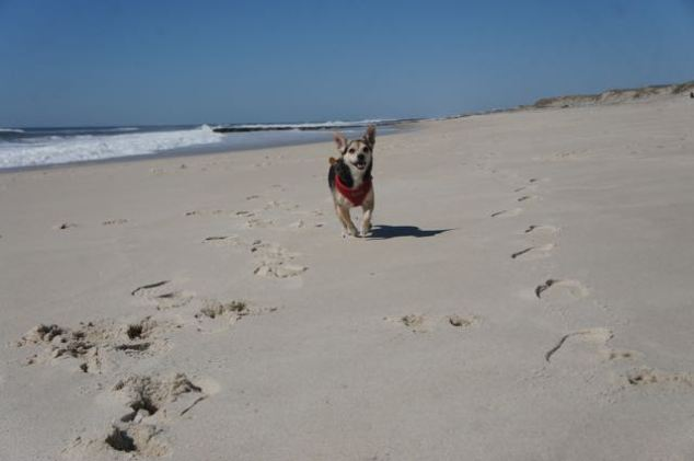 Running on the sand is excellent exercise